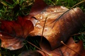 Picture macro, leave, leaf, macro, leaf, autumn, leaves, dew, leaf, drops, water, drop, water, Rosa, nature
