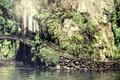 Picture bridge, plants, waterfall, nature, rock, lake, greens, stones
