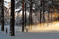 Picture morning, rays, winter, snow, nature, dawn, forest