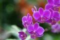 Picture nature, petals, Wallpaper, meadow, plant