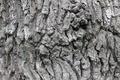 Picture background, texture, bark, oak