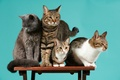 Picture cats, background, company