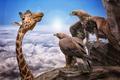 Picture the eagles, background, giraffe
