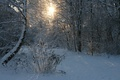 Picture the sun, snow, forest, winter