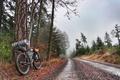 Picture halt, bike, bike, nature, fog, road, forest