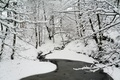 Picture frost, snow, forest, snow, winter, nature, frost, water, Nature, water, forest, winter