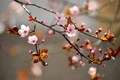 Picture flowers, buds, flowers, trees, branches, trees, branches, inflorescence