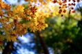 Picture macro, foliage, branches, autumn, nature