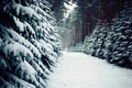 Picture tree, Poland, nature, winter, pine, trail, ate, poland, track, forest