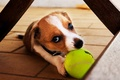 Picture dog, ball, puppy