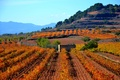 Picture field, plantation, Spain, Catalonia, mountains