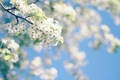 Picture tree, the sky, flowers, spring, flowering
