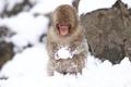 Picture macro, cold, snow, monkey