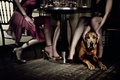 Picture dog, Table, restaurant, girls