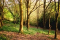 Picture forest, grass, trees, spring