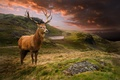 Picture Deer, Animals, Landscape, Grass, Clouds