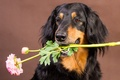 Picture flower, background, each, dog