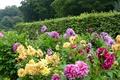 Picture flowers, Park, yellow, purple, trees, the bushes, dahlias