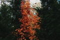 Picture autumn, nature, tree, tree