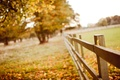 Picture macro, nature, trees, leaves, blur, wooden, the fence, yellow, autumn