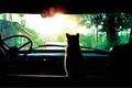 Picture sitting, car, the wheel, red cat