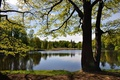 Picture Park, France, shore, leaves, tree, lake, clouds, the sky, grass, spring