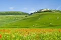 Picture flowers, field, hills, nature, home, forest, italia, Italy, Maki, landscape
