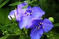 Picture macro, flowers, petals, macro, Flowers, purple