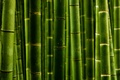 Picture macro, trunks, bamboo, macro photos, nature green style