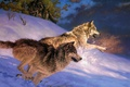 Picture winter, snow, predator, pack, wolves, hunting, HD Wallpapers for desktop