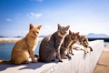 Picture summer, A Tomcat, cats, background