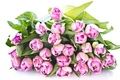 Picture flowers, beauty, flowers, bouquet, Tulips, tulips, leaves, beauty, pink, bouquet, petals, pink