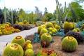 Picture Botanical Garden, nature, garden, cacti, photo, San Marino, CA, USA