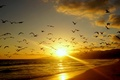 Picture NATURE, SUNSET, The SUN, HORIZON, CLOUDS, The SKY, SAND, LIGHT, BIRDS, COAST, DAL, PACK, SURF, ...