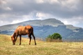Picture field, summer, the sky, grass, clouds, mountains, horse, horse, brown, grazing, Wallpaper from lolita777