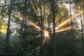 Picture nature, forest, light, trees, the sun