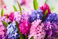 Picture flowers, flowers, hyacinths, hyacinths