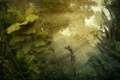 Picture nature, forest, jungle, plants