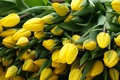 Picture flowers, yellow, bouquet, stems, tulips, leaves, petals, bunch, spring, buds
