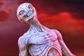 Picture alien, xcom, sectoid