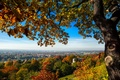 Picture bridge, Germany, Germany, hill, trees, Germany, home, Dresden, the city, tree, view, Dresden, autumn