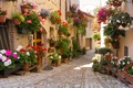 Picture flowers, Greece, the city