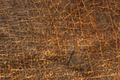 Picture veins, dressing, leather, texture, animal texture, background desktop