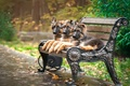Picture puppies, shepherd, Park, trio, bench