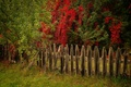 Picture autumn, the fence, trees