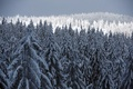 Picture tree, snow, winter