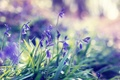 Picture flowers, spring, grass, spring