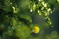 Picture macro, branch, spruce, light, glare, color, needles, branches, green, drops