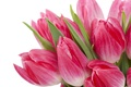 Picture flowers, flowers, beauty, bouquet, bright, bright, Tulips, tulips, leaves, beauty, pink, bouquet, petals, pink