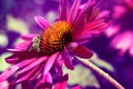 Picture macro, bee, flower, nature